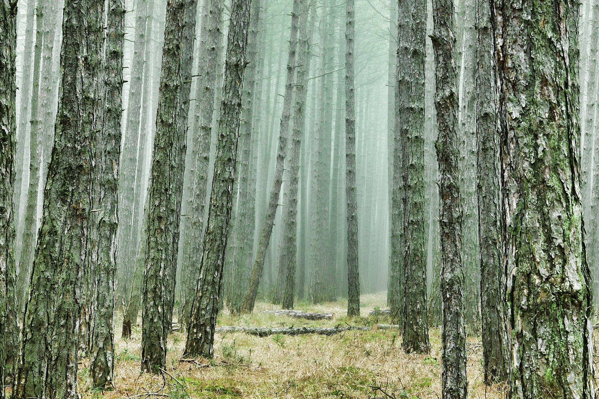 wood by schwoaze